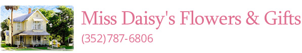 Miss Daisy's Flowers & Gifts